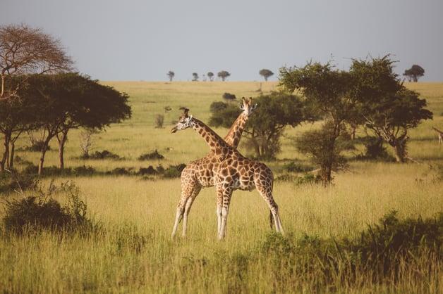 Safari (96 of 120).jpg