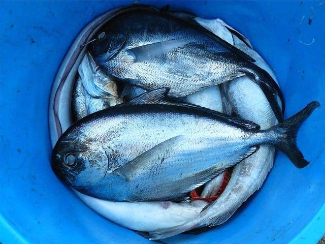 fish-seafood-silver-contrast-52964.jpeg
